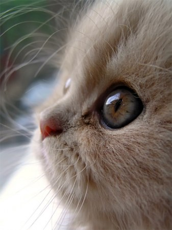 adorable_kitten_photo