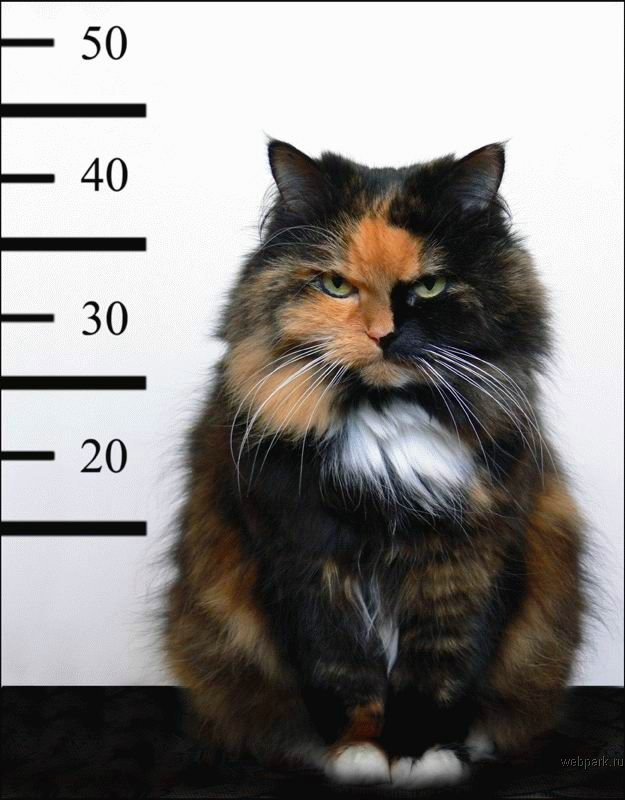 Kitty Mug Shot