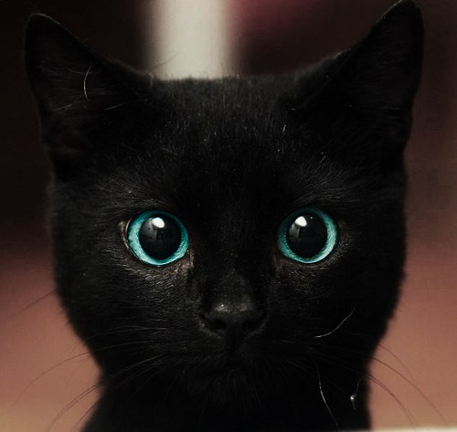 cute_kitten_magical_eyes_photo