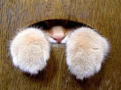 Kitty Peek-A-Boo
