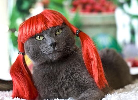 funny_cat_wearing_wig_photo