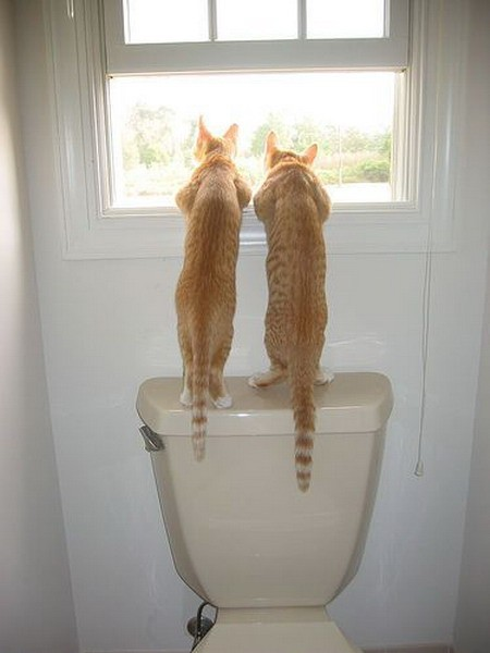 funny_cats_on_toilet_photo